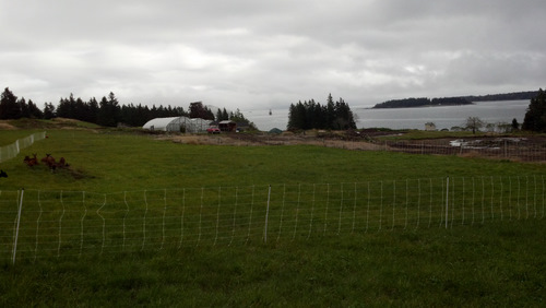 Goat's view of the moveable hoop houses, moveable chicken coops, and bay from their moveable pasture.